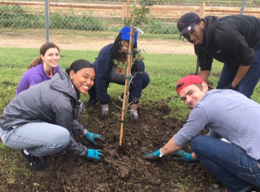 Five people smiling, wearing gardening gloves and kneeling by a tree that has just been planted